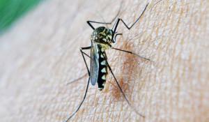 Комар на коже человека.