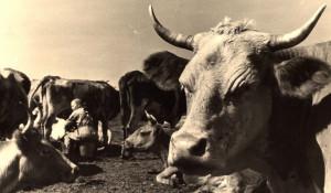 Молочная промышленность региона.