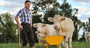 Сельское хозяйство. Фермер и коровы.
