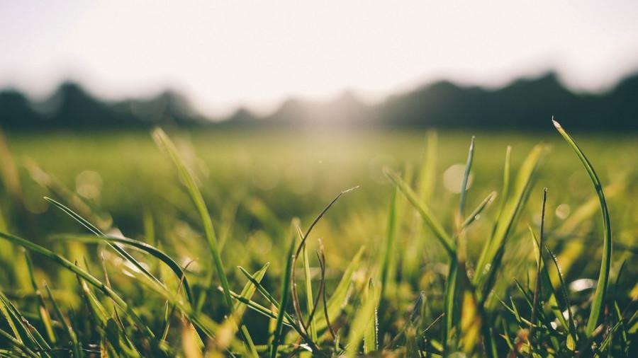 Трава. Лето, жара.