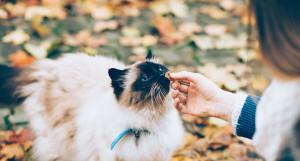 Осень. Кот.
