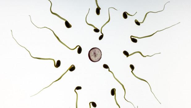 Сколько стоит сперма барнаул