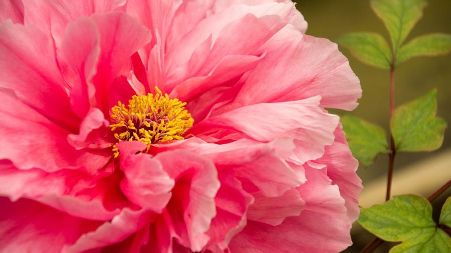 Весеннее равноденствие. Цветы