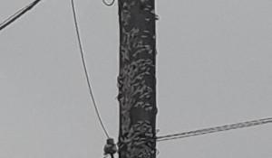 Непарный шелкопряд в Алтайском крае.