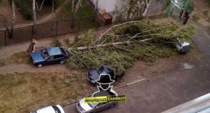 22 августа в Барнауле дерево упало на машину