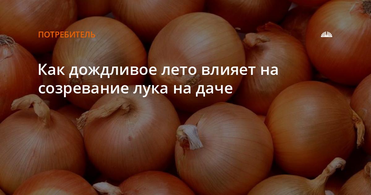 Когда убирать лук в Ленинградской области если лето очень дождливое