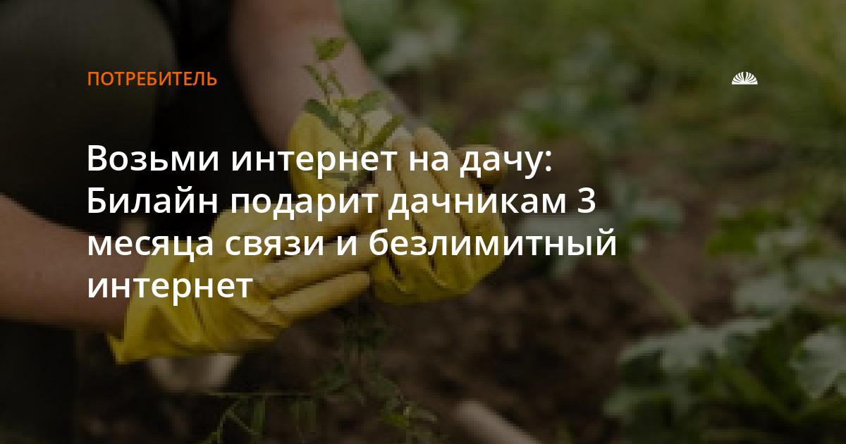 дачники полют или полят